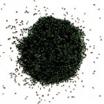 czarnuszka-siewna