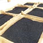 nasiona-czarnuszki